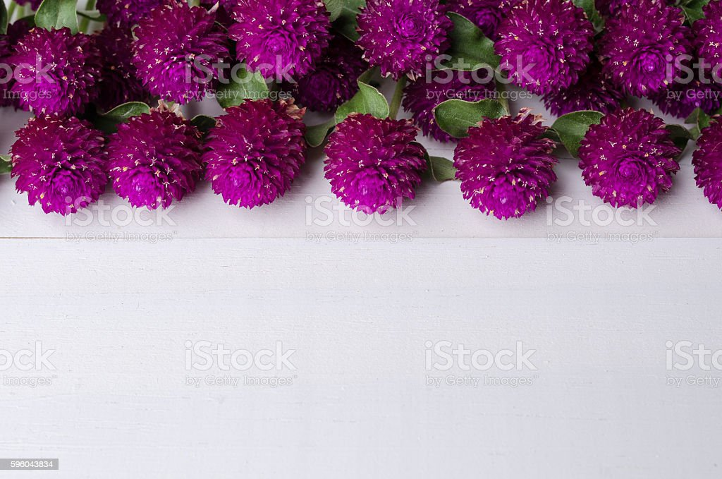 Close up of globe amaranth with copy space on table royalty-free stock photo