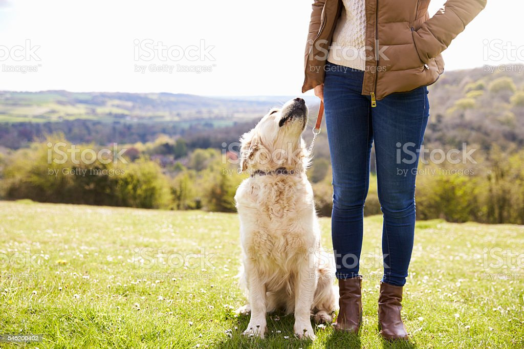 Close Up Of Golden Retriever On Walk In Countryside - foto de acervo