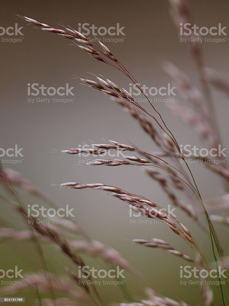 Close up of grass blades stock photo