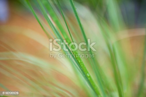 Close up of a blade of grass with high levels of de-focus.