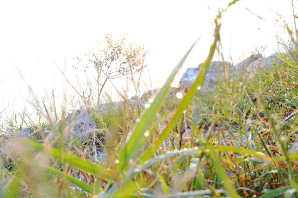close up of grass in the morning dew - deign stock pictures, royalty-free photos & images