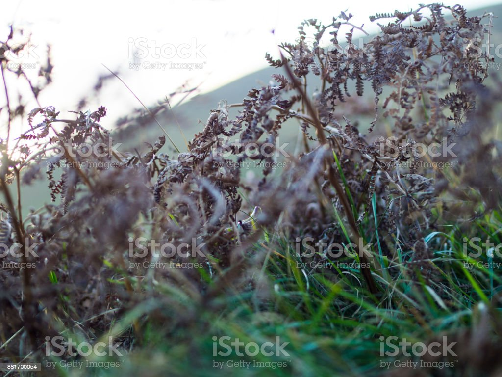 Close up of Grass stock photo