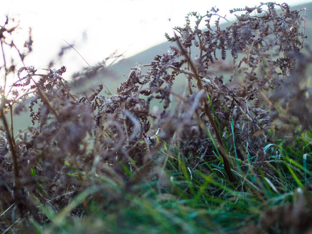 Close up of Grass stock photo