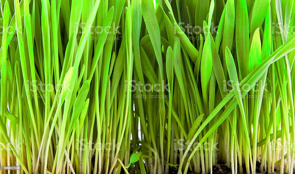Close - up of grass royalty-free stock photo