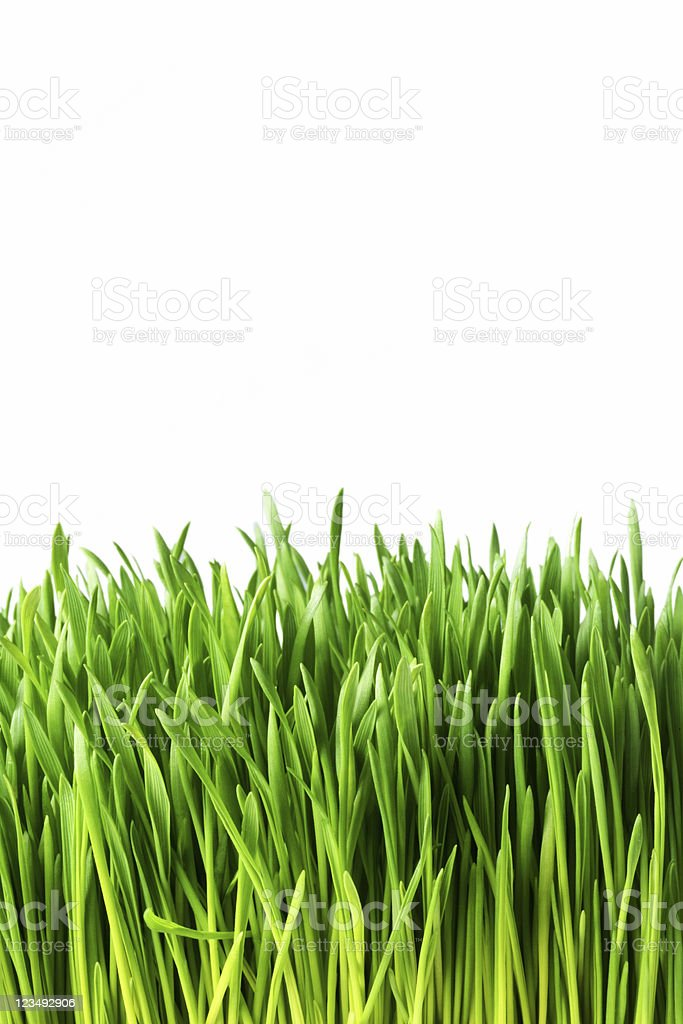close up of green grass royalty-free stock photo