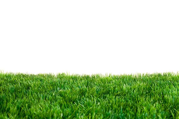 gramado verde - gramado terra cultivada - fotografias e filmes do acervo