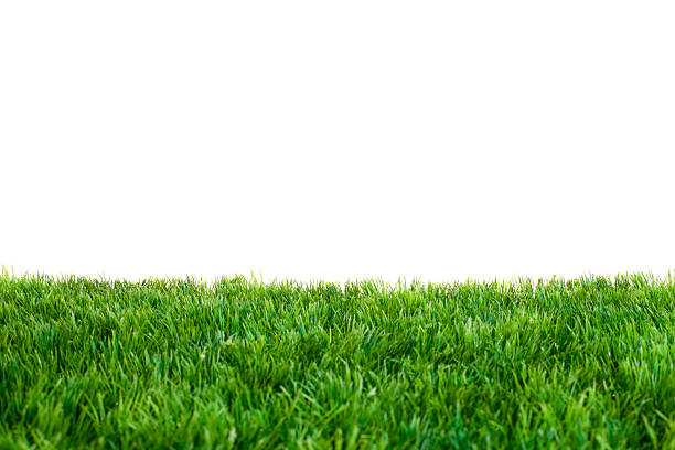 Close up of green grass with white background Artificial Turf in Front of White Background. Focused near Horizon. turf stock pictures, royalty-free photos & images