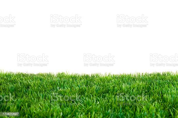 Photo of Close up of green grass with white background