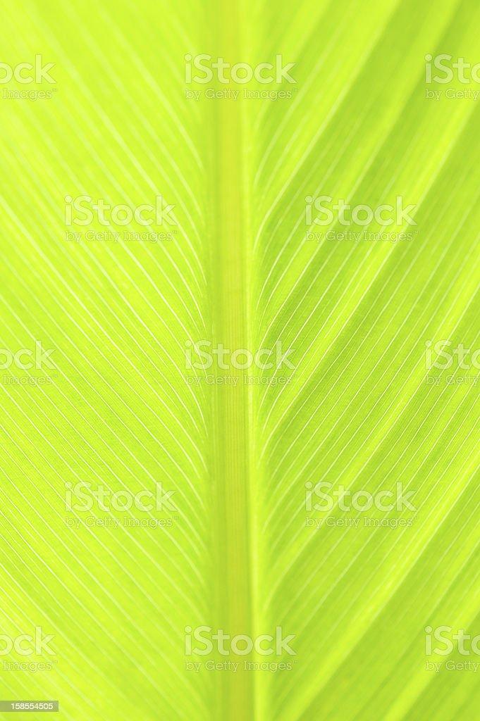 삼각대를 녹색 잎 royalty-free 스톡 사진