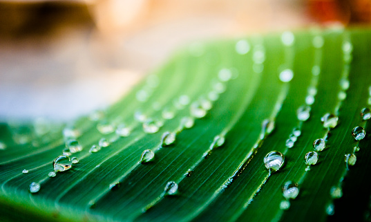A green leaf coverd with water drops in a summer day