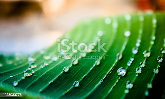 istock Close up of green leaf with water drops 1253033773