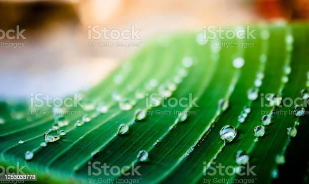 Photo of Close up of green leaf with water drops