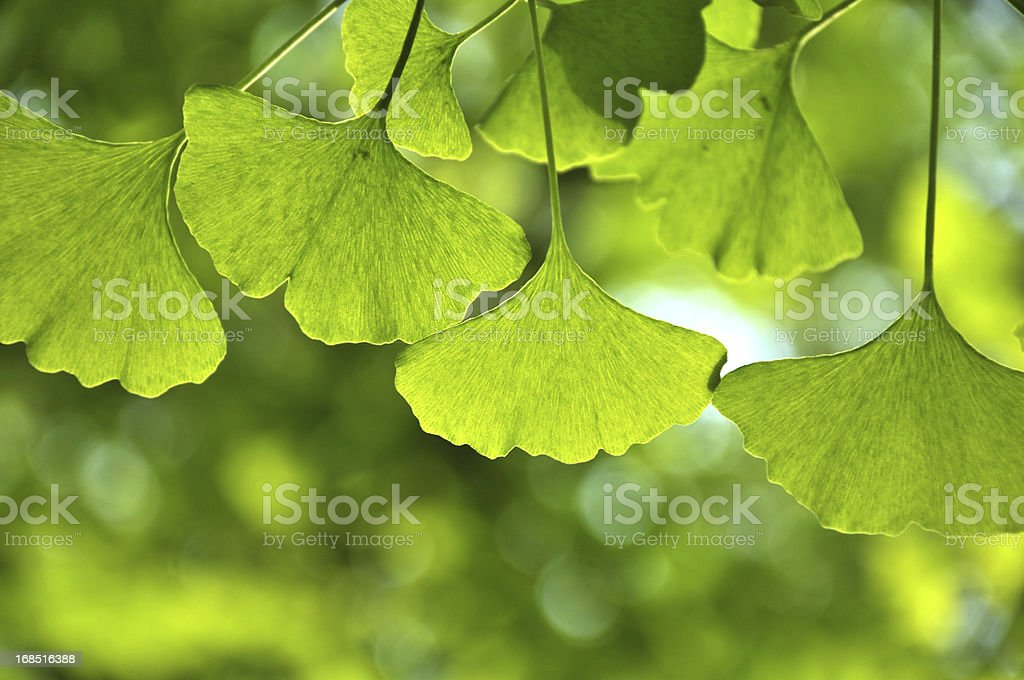 Close up of green leaves in sunlight stock photo