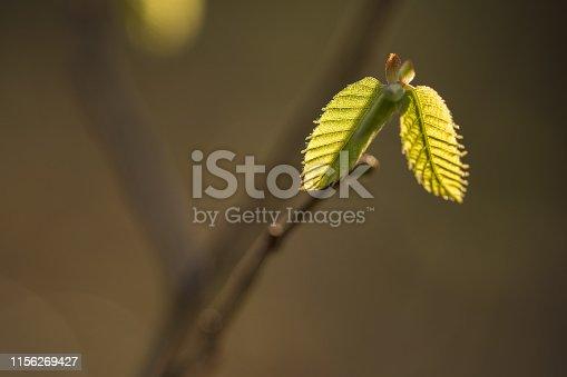 close up of green leaves / leaf in light in blurred dark brown background, design
