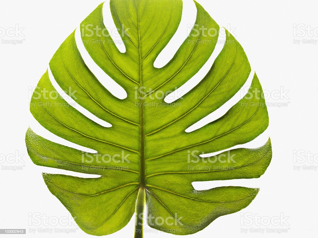 Close up of green palm leaf stock photo