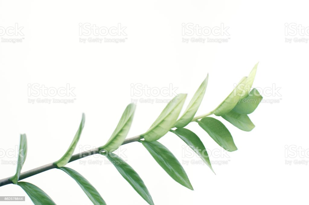 close up of green plant stock photo
