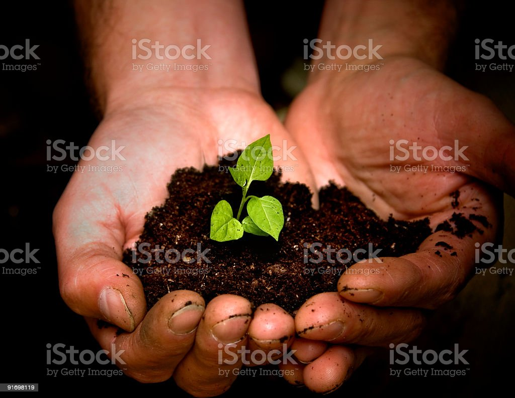 Close up of hands holding soil with growing plant shoot  royalty-free stock photo