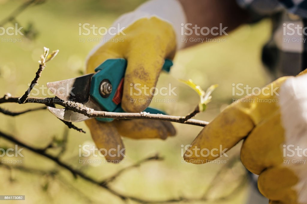 Close up of hands that working with secateurs royalty-free stock photo