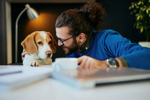 Close up of handsome caucasian bearded smiling freelancer sitting in his modern office and playing with his dog. stock photo
