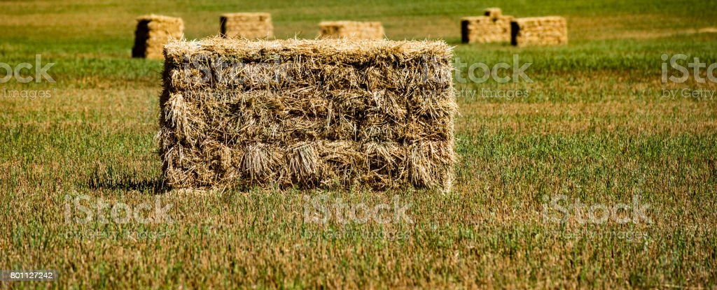 Close up of hay bale in green grass paddock stock photo