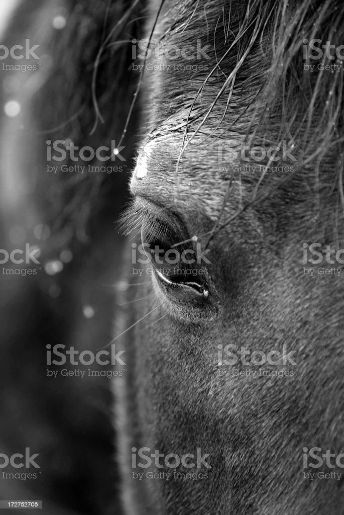 Close up of horse eye stock photo