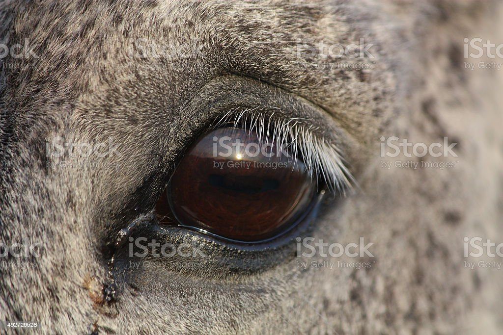 Close Up Of Horse Eye Stock Photo - Download Image Now - iStock