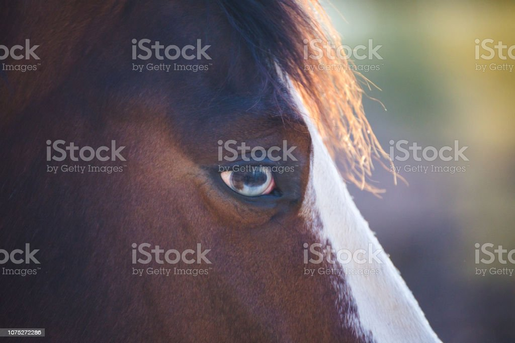 Close Up Of Horse Horses Face Beautiful Horse Stock Photo Download Image Now Istock