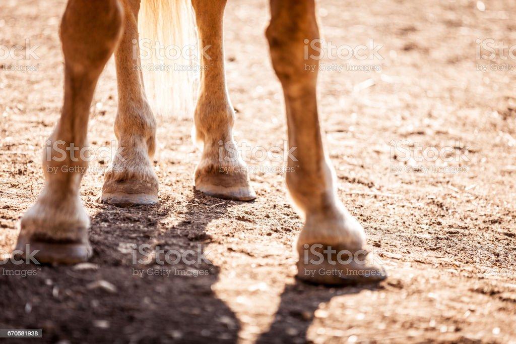 Gros plan des pieds Horse´s - Photo