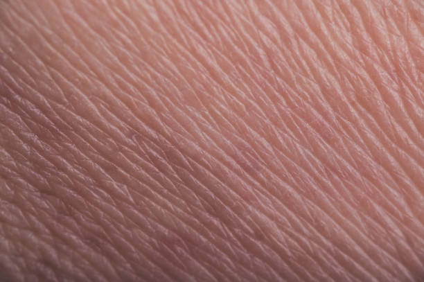 close up of human skin texture detail background - hair line surface stock photos and pictures