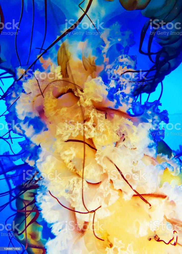 Nahaufnahme von Quallen im aquarium – Foto