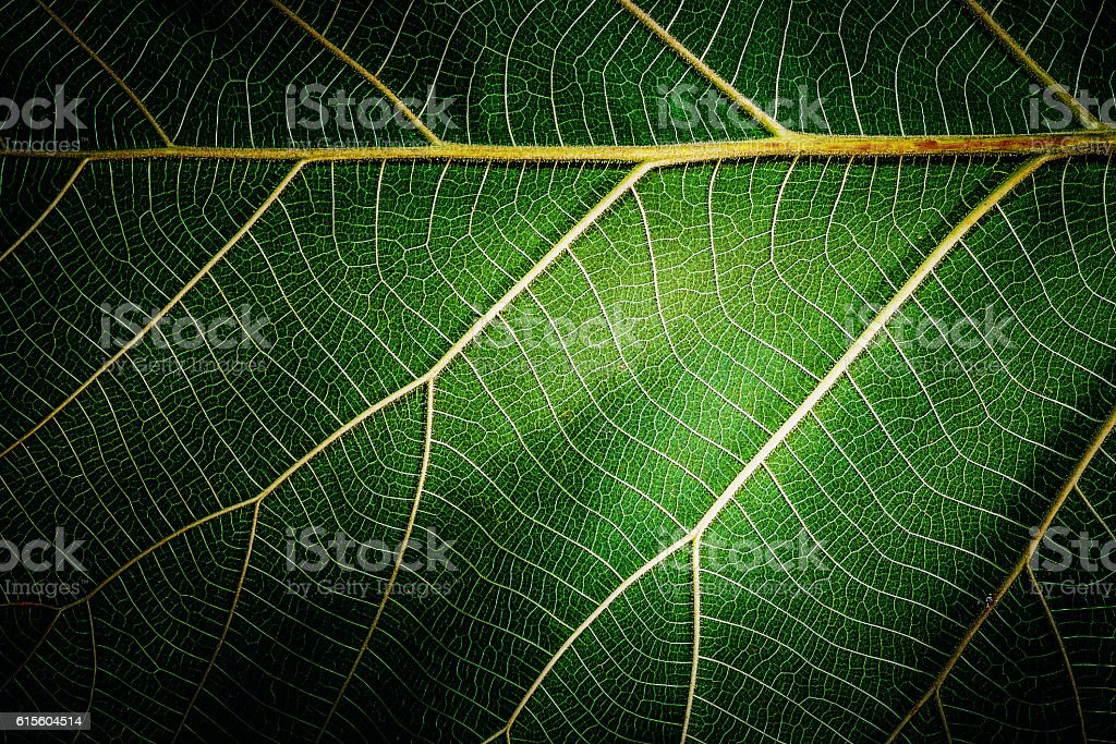 Close up of leaf texture background stock photo