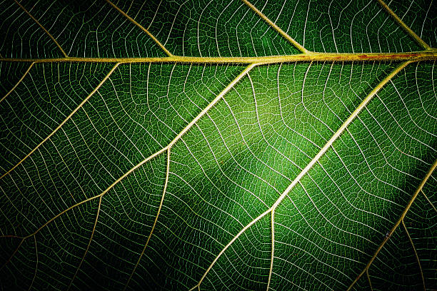 Close up of leaf texture background - Photo