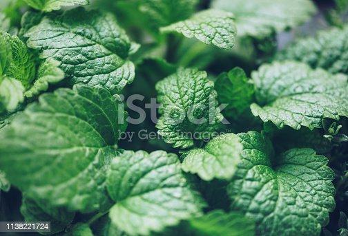 istock Close up of lemon balm herb 1138221724