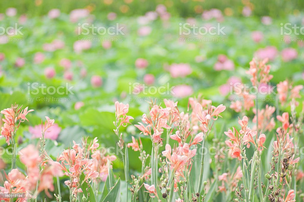 close up of little flowers with green behind royalty-free stock photo