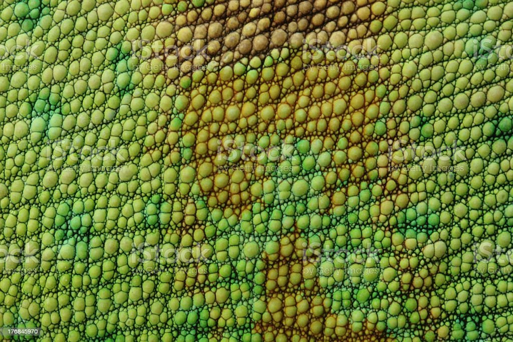 A close up of lizard skin or fabric close-up view on veiled chameleon skin Abstract Stock Photo
