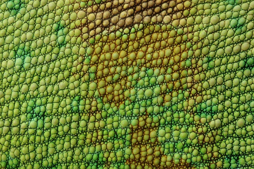 A Close Up Of Lizard Skin Or Fabric Stock Photo - Download Image Now