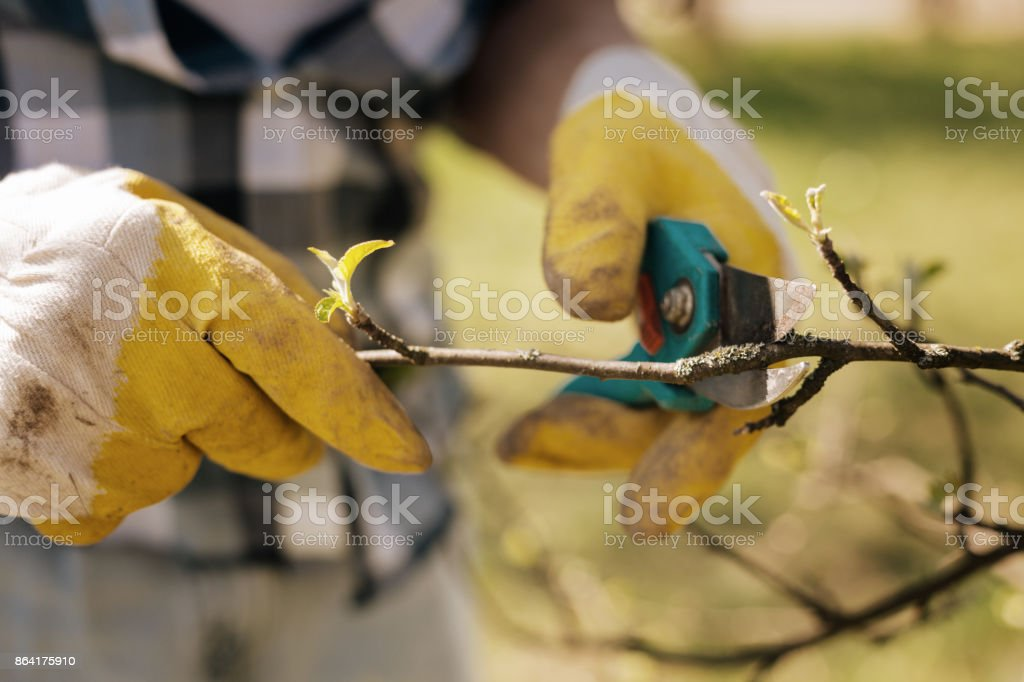 Close up of male hands that holding secateurs royalty-free stock photo