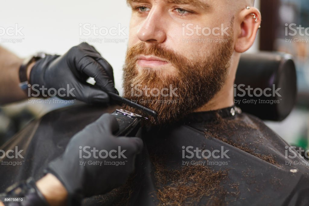 Close Up Of Male Professional Hairdresser Serving Client With Thick Big  Beard By Clipper. Ginger