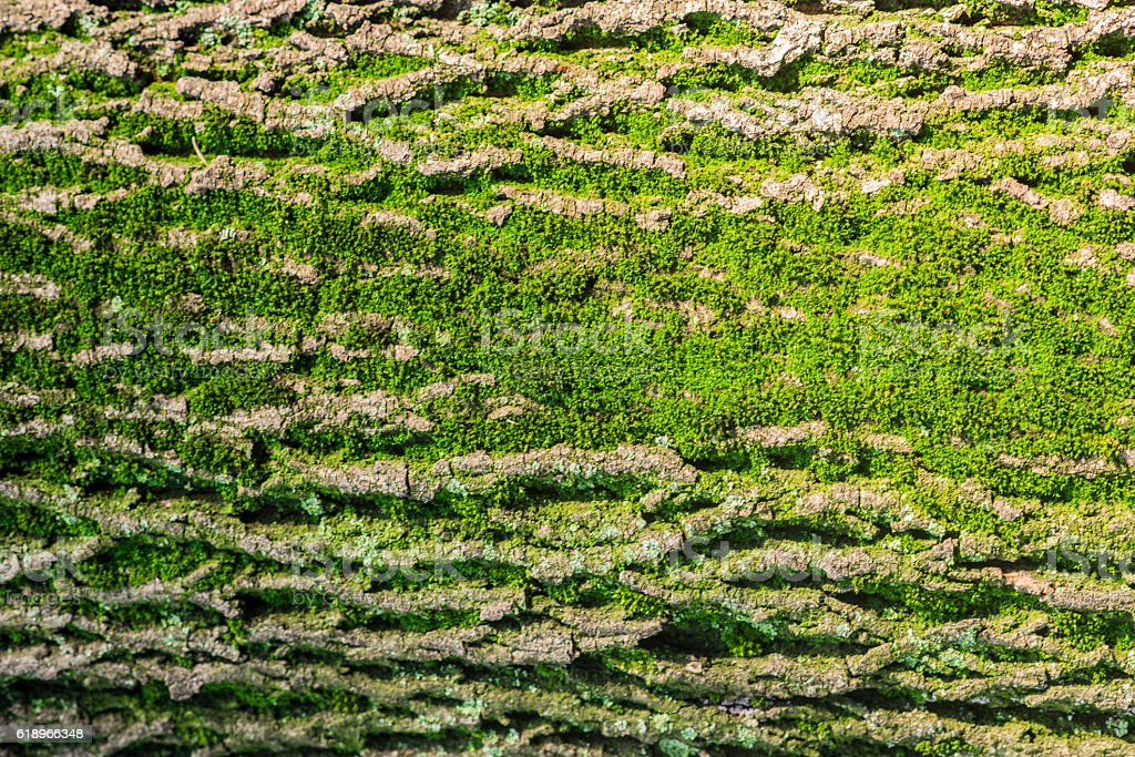 Close up of Moss on tree. Nature life background. stock photo