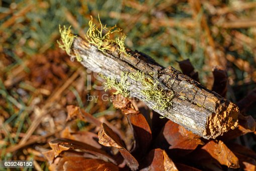 istock Close up of moss on tree 639246150