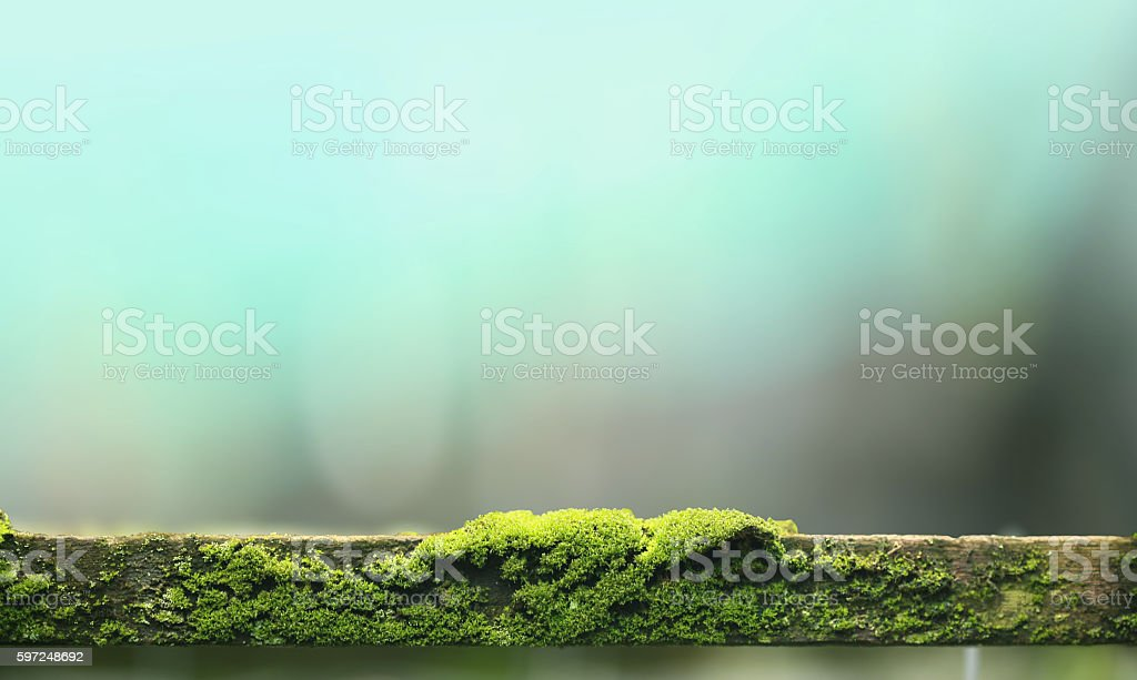 Close up of Moss on wood stock photo