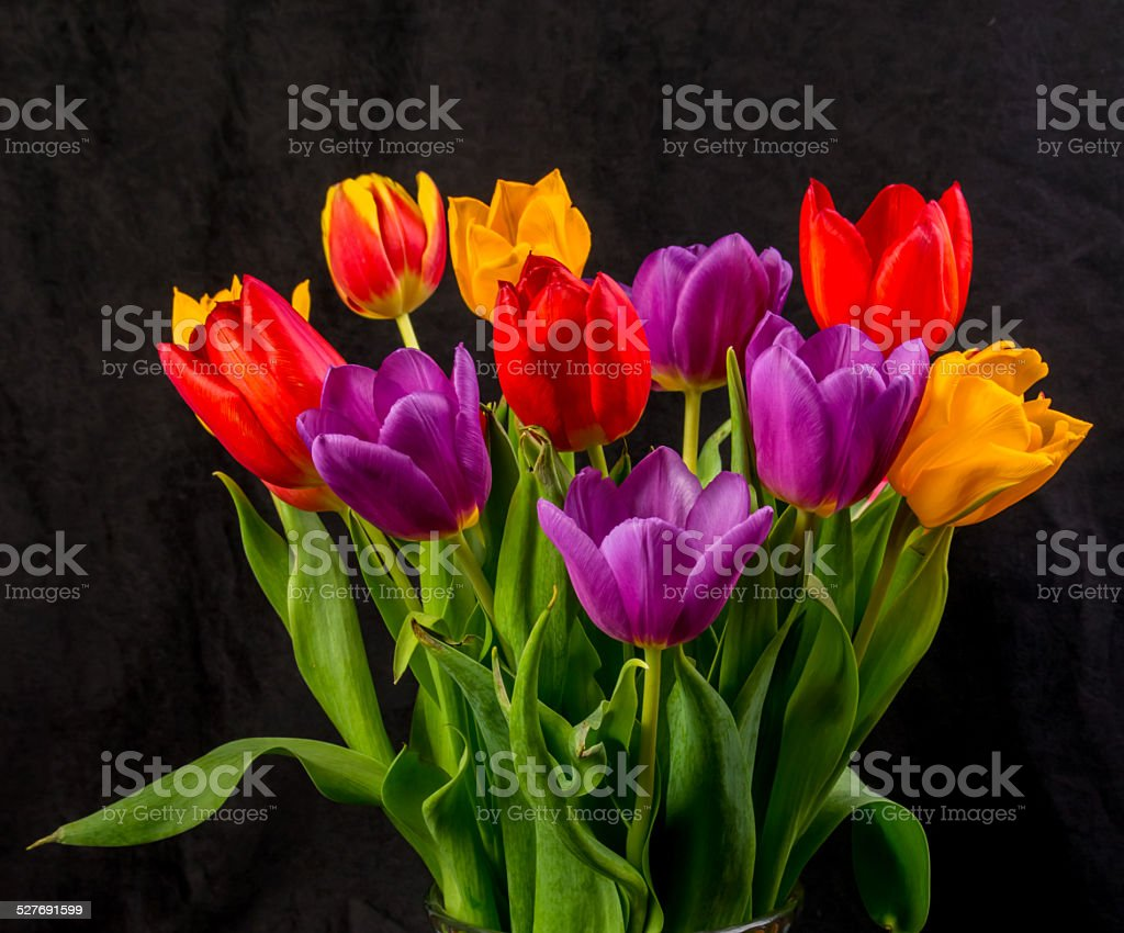 Close up of multicoloured tulips on black stock photo