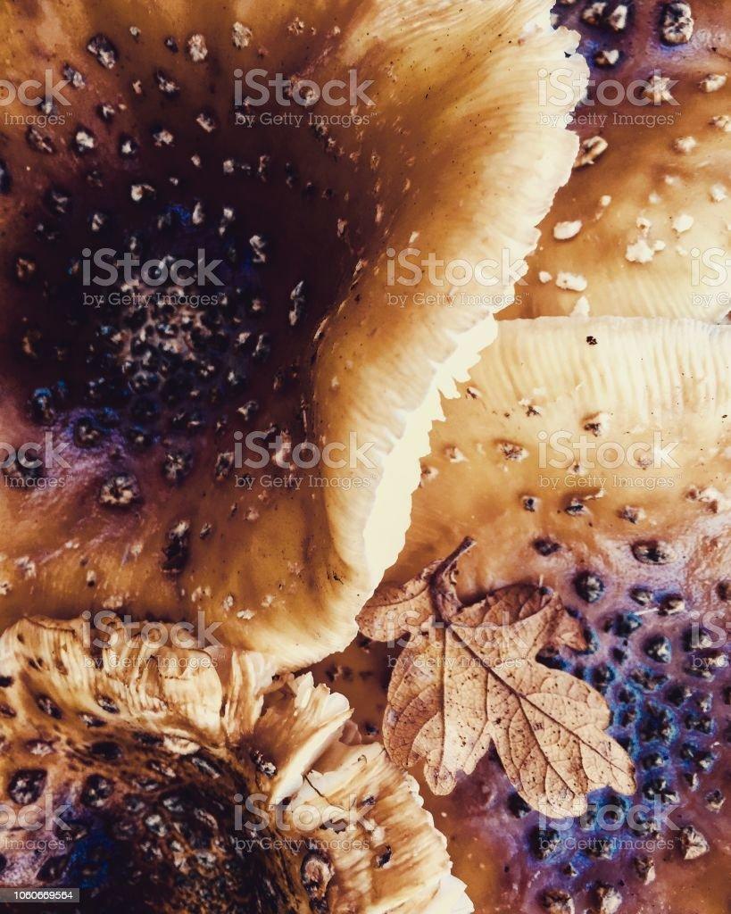 Nahaufnahme von Pilz Natur abstrakt – Foto