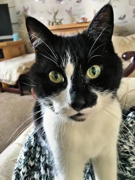 Close up of my cat casper picture id1029441066?b=1&k=6&m=1029441066&s=612x612&w=0&h=td6ms5p tduanp7j51mi84 5cy21c5xj4 vqsuu3n w=