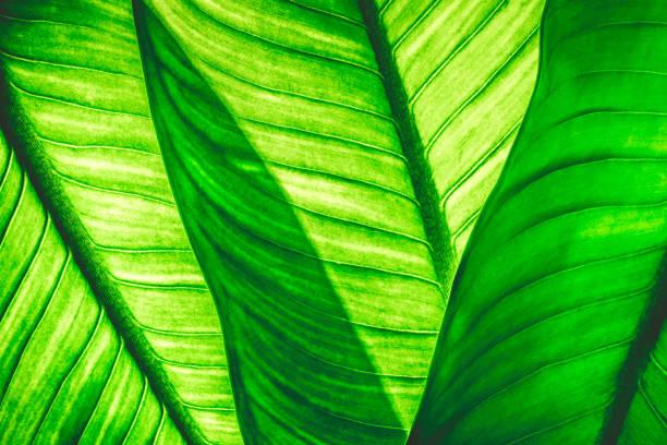 Nahaufnahme des natürlichen grünen Blätter Hintergrund, tropischer Vegetation Textur. – Foto