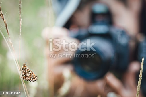 istock Close up of Nickerl's fritillary butterfly in the grass in nature with a photographer in background 1139089815