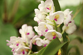Close up of orchids bouquet with natural background, beautiful blooming orchid flower in the garden.