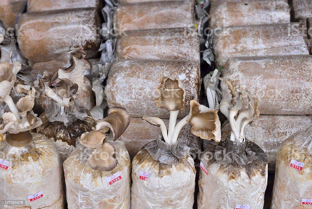 Close up of organic mushroom bag royalty-free stock photo