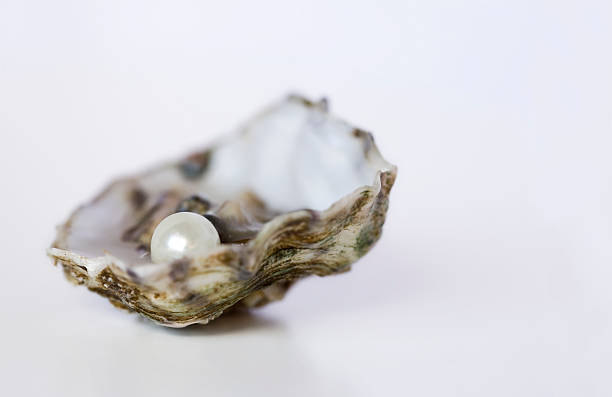 Close up of oyster with pearl on white background Half shell oyster with precious pearl mollusk stock pictures, royalty-free photos & images