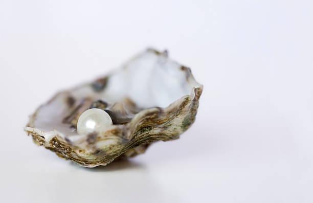 oyster z perłą - mięczak zdjęcia i obrazy z banku zdjęć